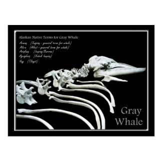Bones of an Alaskan Gray Whale Postcard