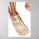 Bones of the Foot 15 Posters