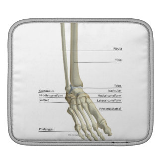 Bones of the Foot 6 Sleeve For iPads