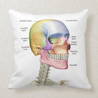 Bones of the Head and Neck 3 Throw Pillow