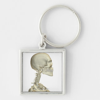 Bones of the Head and Neck 6 Keychains