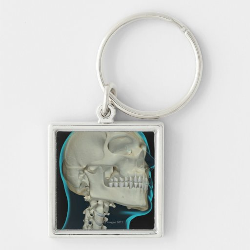 Bones of the Head and Neck 8 Keychains