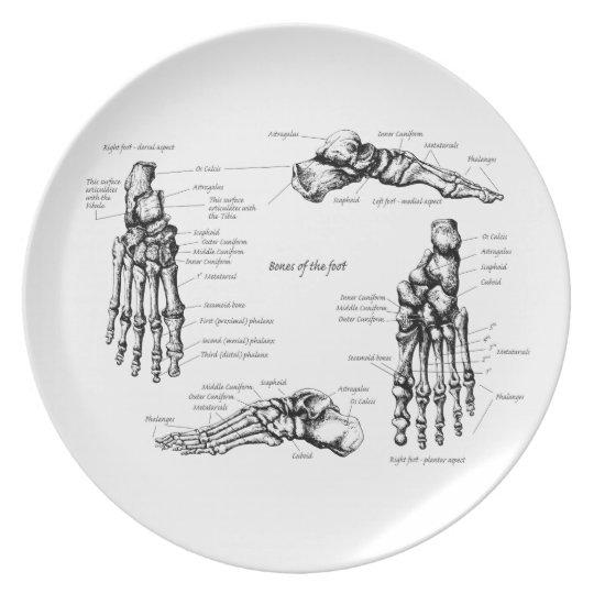 Bones of the Human Foot Plate