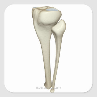 Bones of the Leg 4 Square Sticker