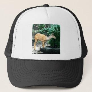 Bongo from Safari Trucker Hat