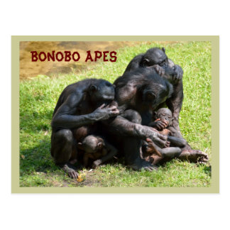 Bonobo Apes Postcard