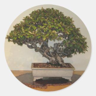 Bonsai at National Arboretum, Washington D.C. Round Sticker