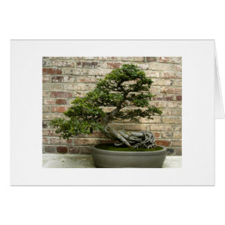 Bonsai at Phipps Conservatory Card