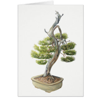 "Bonsai Card (5"" x 7""),  white envelopes included"