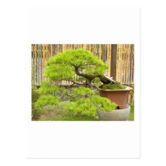 Bonsai Greetings/Invitation Postcard