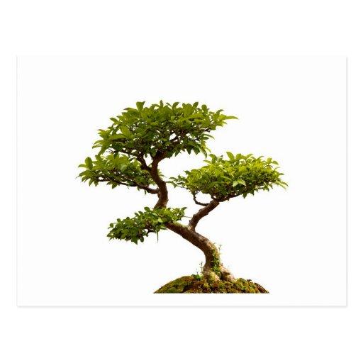 Bonsai plant postcard