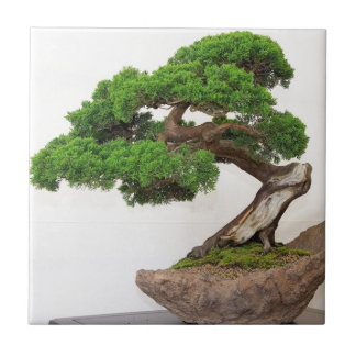 Bonsai tree- natural tile