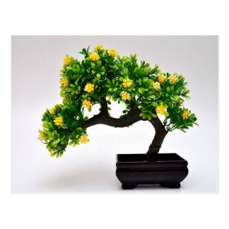 Bonsai tree postcard