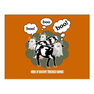 BooCows BCXA Postcard