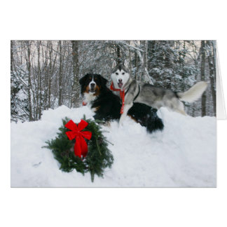 Boof and Molly in a Snowbank Card