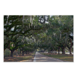 Boone Hall Plantation Avenue of Oaks Poster