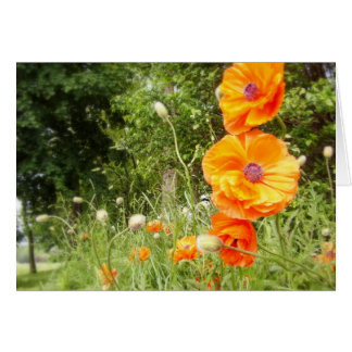 Boppy Poppies / Note Card