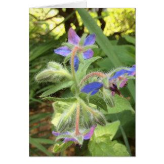 BORAGE Blue Pink Green --- Card