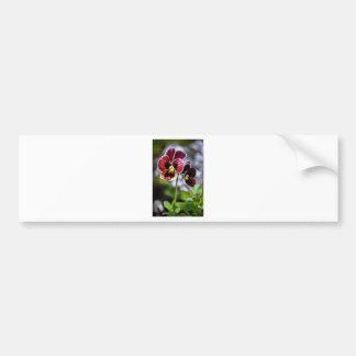 Bordeaux Pansy Flower Duo Bumper Sticker