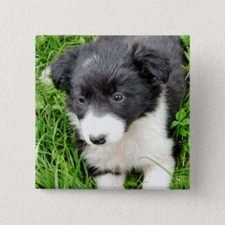 BORDER COLLIE 2 INCH SQUARE BUTTON