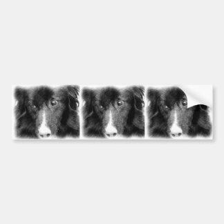 Border Collie Animal Art Bumper Sticker