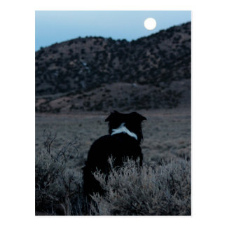 Border Collie Astronomer Postcard