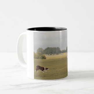 Border collie at sheep trial - mug