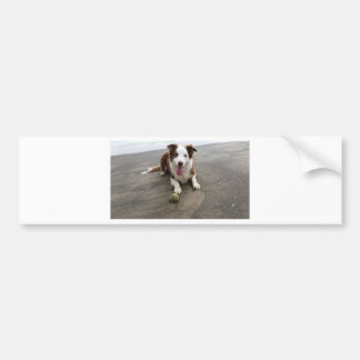 Border collie at the beach bumper sticker