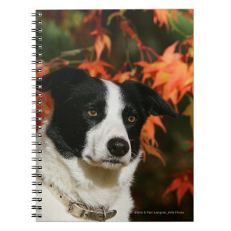 Border Collie Autumn Headshot Notebooks