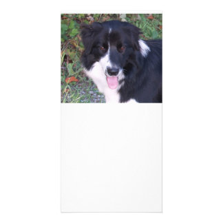 Border_Collie_b-w Personalized Photo Card