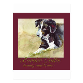 Border Collie Beauty and Brains Postcard