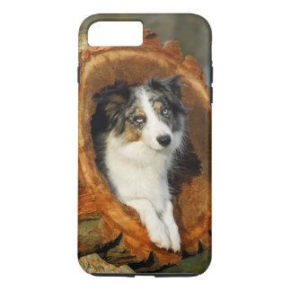 Border Collie Blue Merle Dog, Cell Phonecase iPhone 8 Plus/7 Plus Case