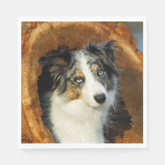 Border Collie Blue Merle Dog Head Photo Pet on - Disposable Napkins