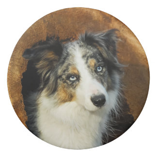 Border Collie Blue Merle Dog Head Photography Pet Eraser