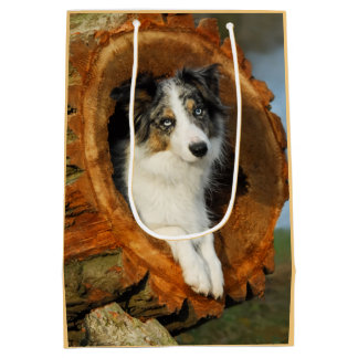 Border Collie Blue Merle Dog Head Photography Pet Medium Gift Bag