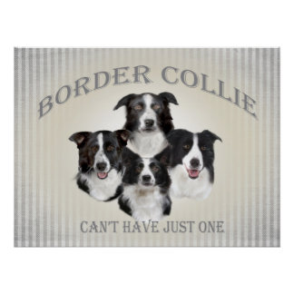 Border Collie Can't Have Just One Poster