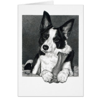 "Border Collie Card - ""Magpie"""