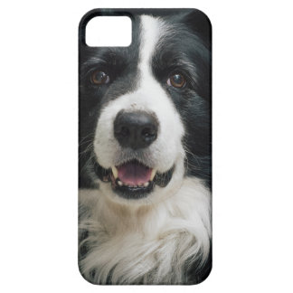 border-collie case for the iPhone 5