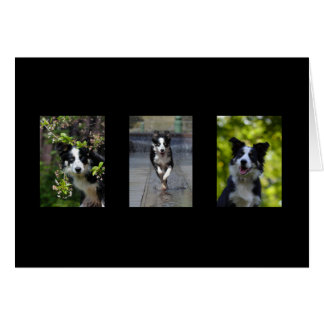 Border Collie dog blank custom note card