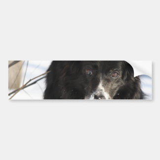 Border Collie Dog  Bumper Stickers