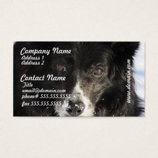 Border Collie Dog Business Cards