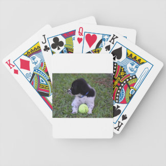 BORDER COLLIE DOG RURAL QUEENSLAND AUSTRALIA BICYCLE PLAYING CARDS