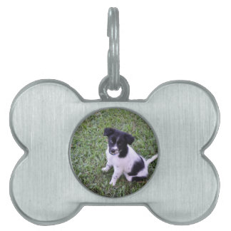 BORDER COLLIE DOG RURAL QUEENSLAND AUSTRALIA PET NAME TAG