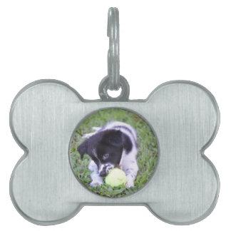 BORDER COLLIE DOG RURAL QUEENSLAND AUSTRALIA PET NAME TAGS