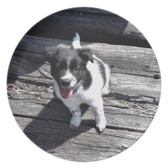 BORDER COLLIE DOG RURAL QUEENSLAND AUSTRALIA PLATE