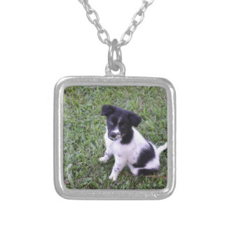 BORDER COLLIE DOG RURAL QUEENSLAND AUSTRALIA SILVER PLATED NECKLACE