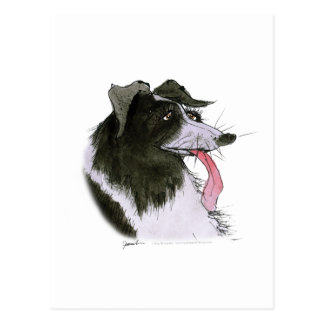 Border Collie dog, tony fernandes Postcard