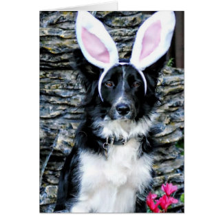 Border Collie Easter Bunny Card