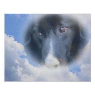 Border Collie Eyes Blue Sky Dog Art Poster
