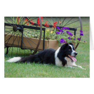 Border Collie & Flower Cart Note Card